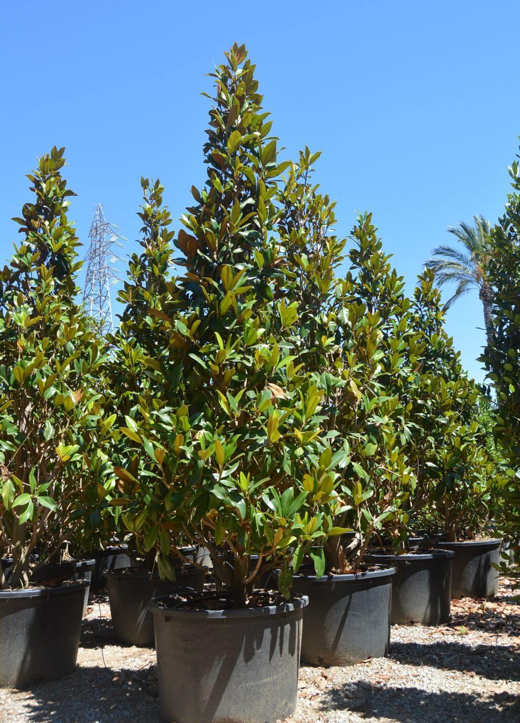 benages sl jardineria associaci de viveristes de tarragona